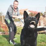 Dog Bite Lawyer | Birkhold Maider Attorneys