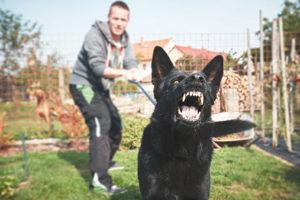 New Jersey Dog Bite Lawyer   Birkhold & Maider, LLC